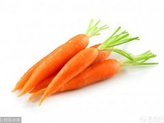 胡萝卜生吃和熟吃哪个更营养